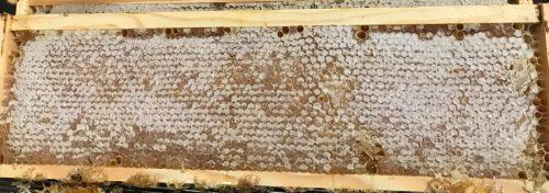 Golden Blossom Honeycomb 350g
